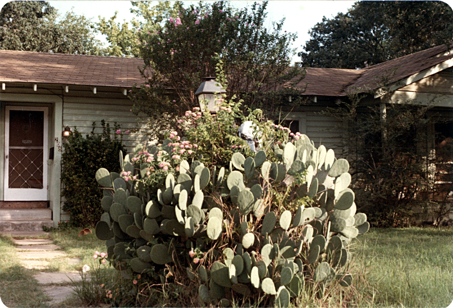 Another view of the Cactus.